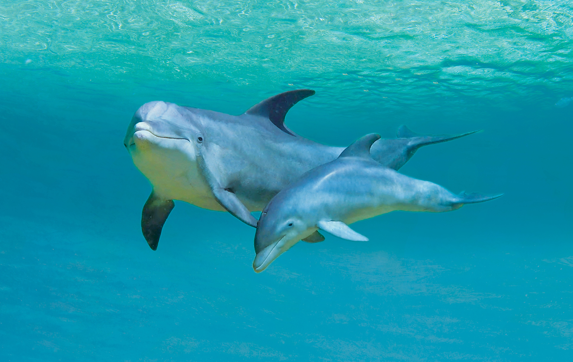 Baby dolphin pictures