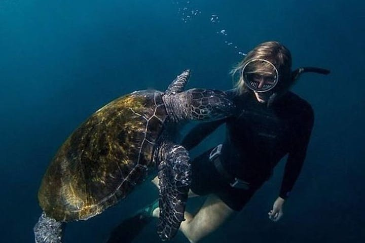 Woman diving with sea turtle