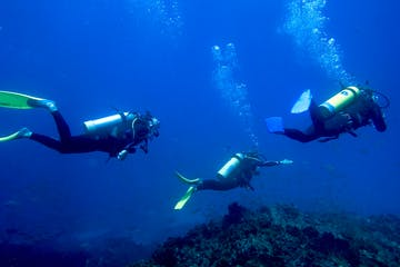 3 people diving underwater