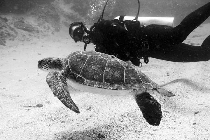 One person diving with turtle