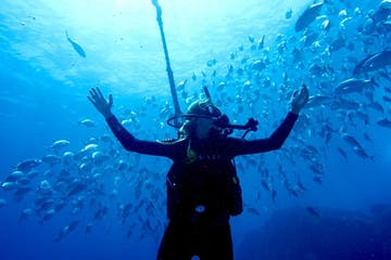 Scuba diver surrounded with different fish