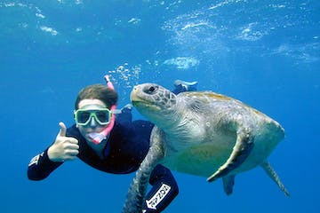 Turtle and Snorkeller