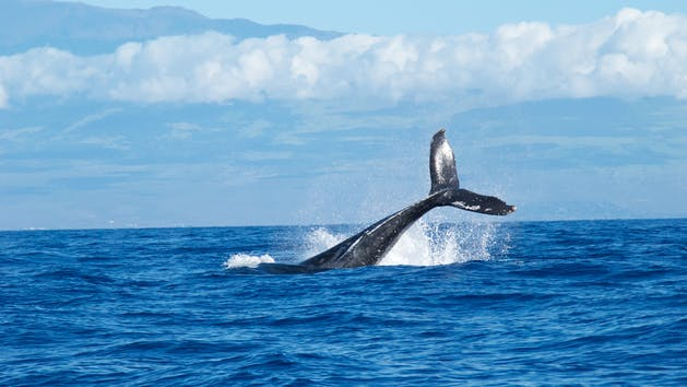 Kamanu Charters Whale Watch Tour