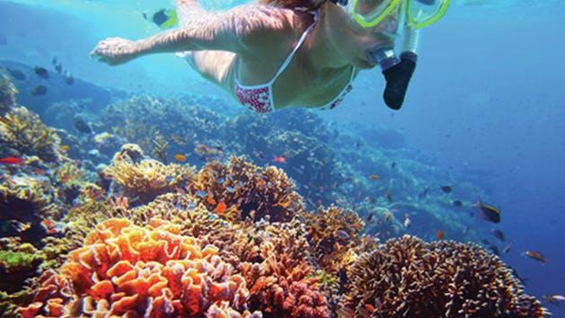 Kamanu Charters Underwater Marine Life
