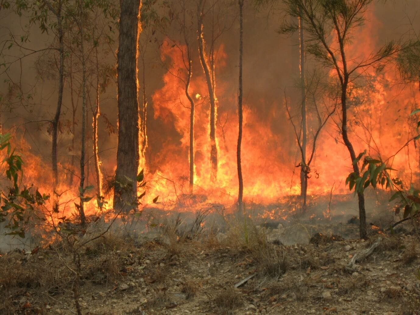 Rappel fire fighters are used to combat remote bushfires.