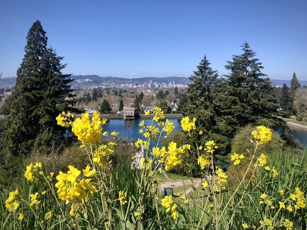 yellow flowers in front of park and city view with trees