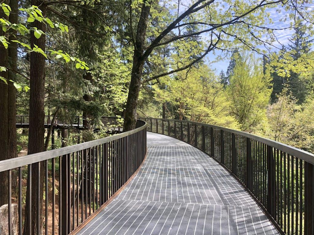 boardwalk through lush greenery