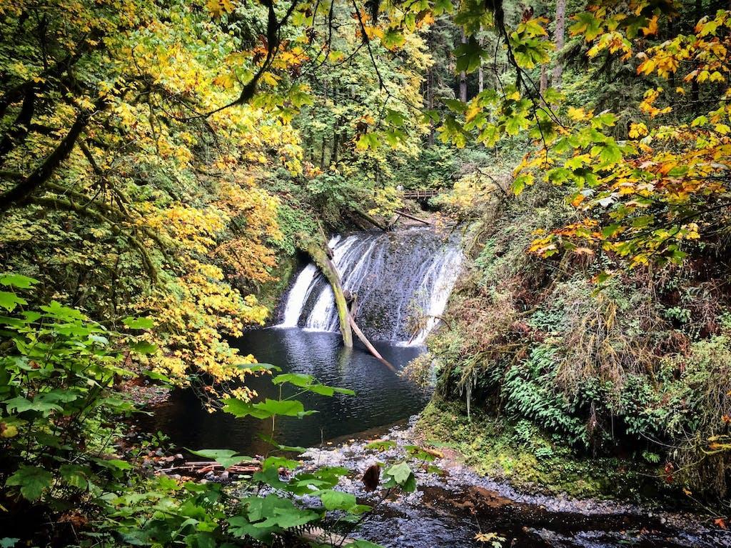 waterfall through tree foliage