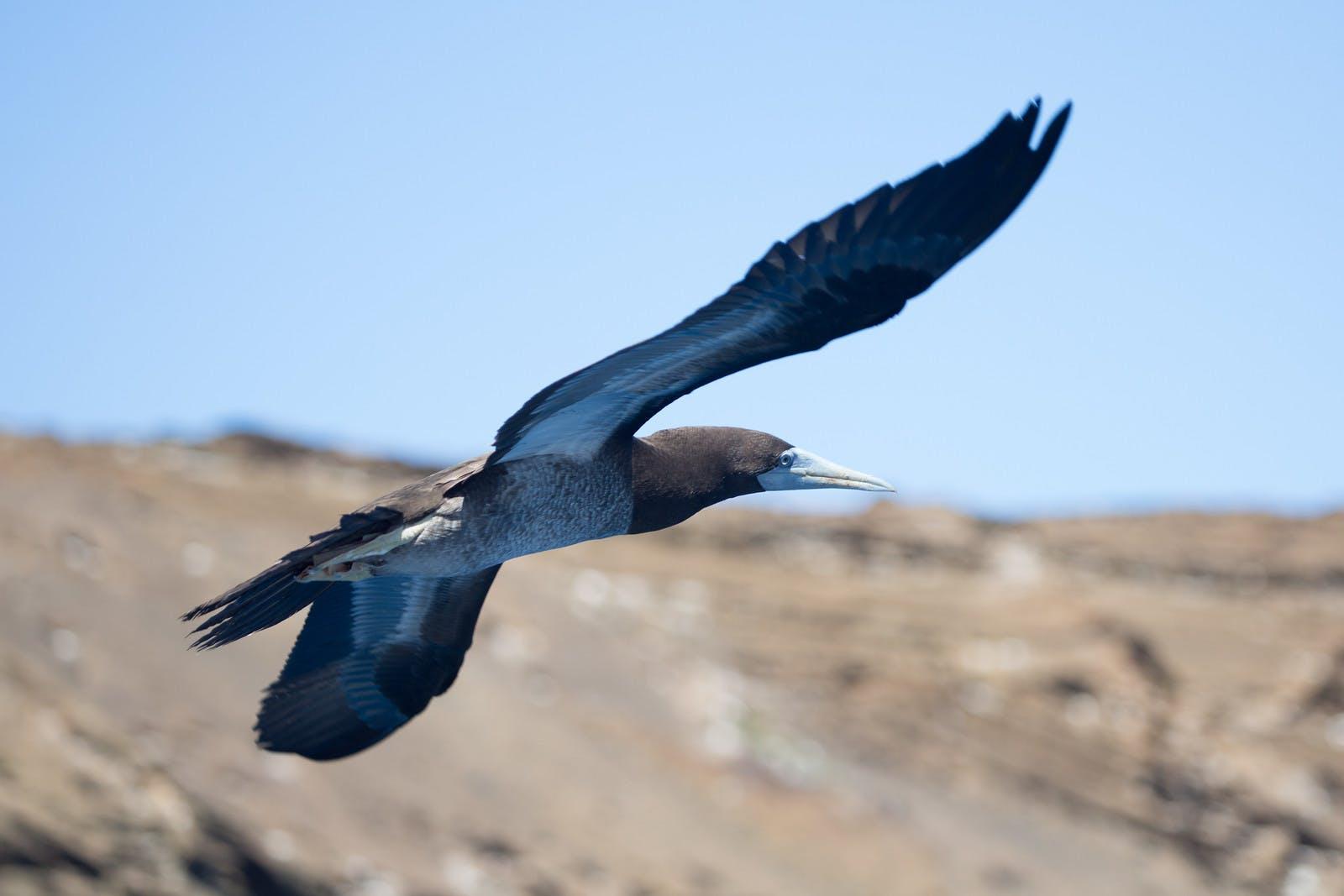 Lehua Bird Sanctuary