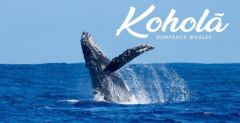 Kauai whale watching tours