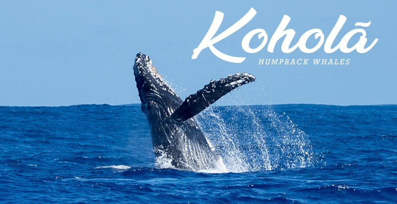 Kauai whale watching tours