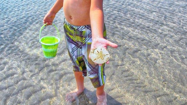 Kid holding sand dollar and plastic sand bucket