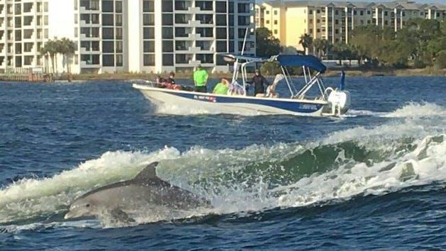 Dolphin tour Panama City Beach Florida