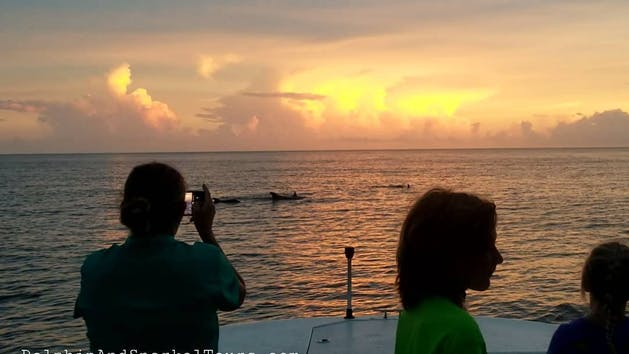 Sunset dolphin tour