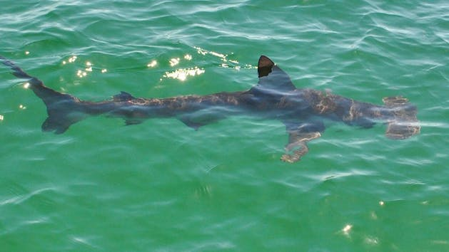 Snorkeling Tour Dolphin And Snorkel Tours