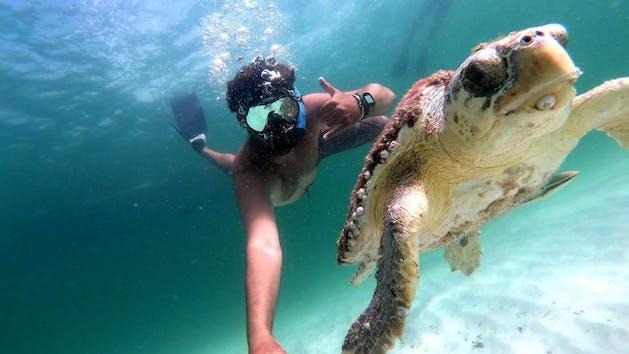 Turtle on Snorkel Tour Panama City Beach Florida