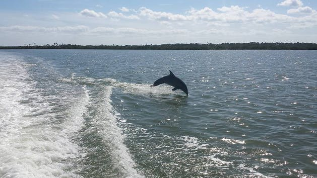 Dolphin jumping in Indian River