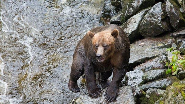 Anan Bear And Wildlife Observatory Alaska Waters
