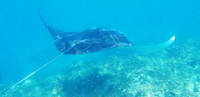 My Kona Adventures | Snorkeling, Dolphin & Whale Watching