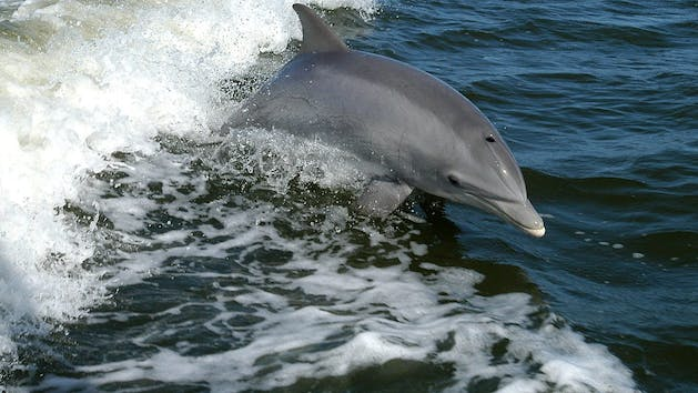Gl Bottom Dolphin Tours In Orange Beach Al