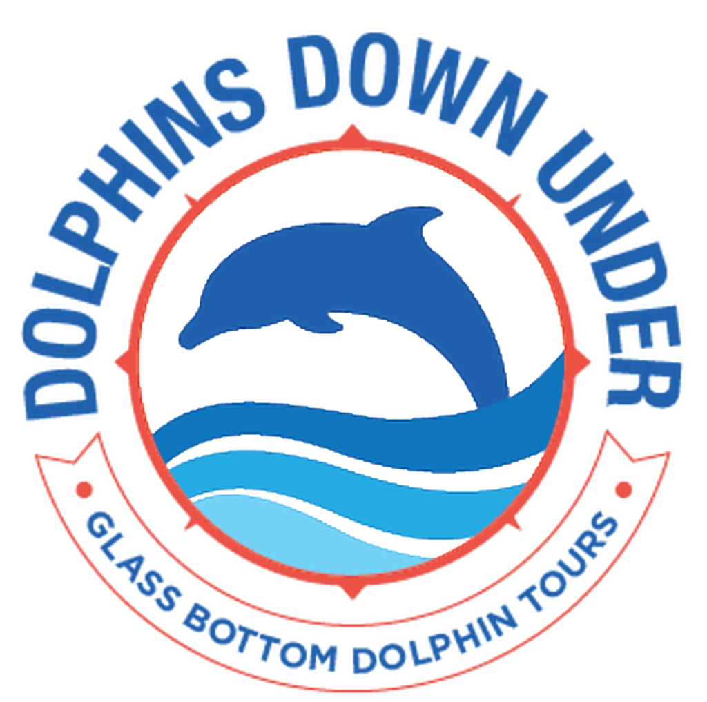 Dolphins Down Under | Glass Bottom Boat Tours Orange Beach AL