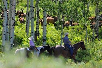 1/2 Day Summer Trail Ride | Del's Triangle 3 Ranch