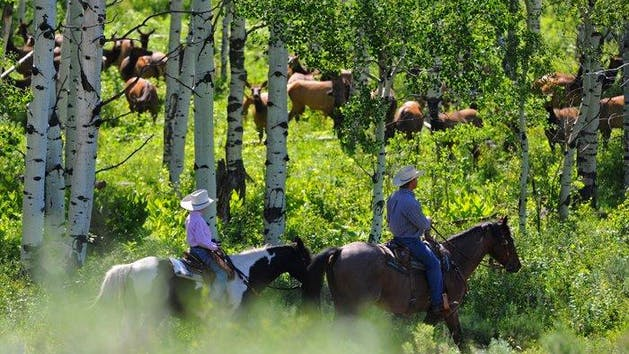 1/2 Day Summer Trail Ride | Del's Triangle 3 Ranch