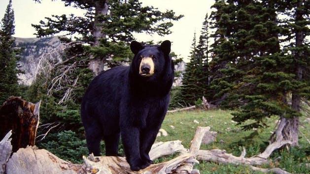 Black Bear Expedition Traitors Cove