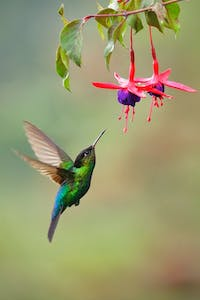 a hummingbird flying in the air