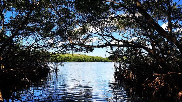 Mangrove Tunnels in Florida