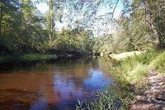 a river running through a forest