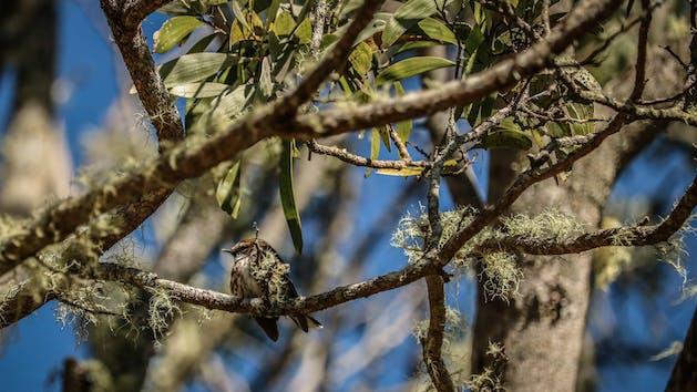 Bird sitting in a mossy tree