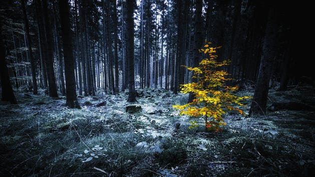Mystical Forest Madison Heights Escape Room Zone