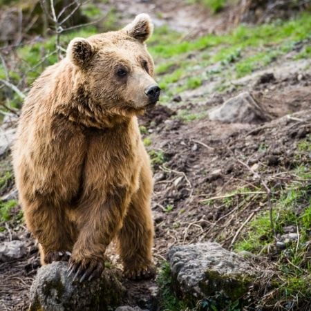 The Anatomy Of A Bear Attack | Alaska Backcountry Adventure Tours