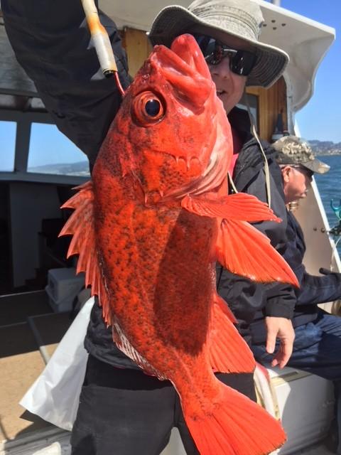 upclose rockfish