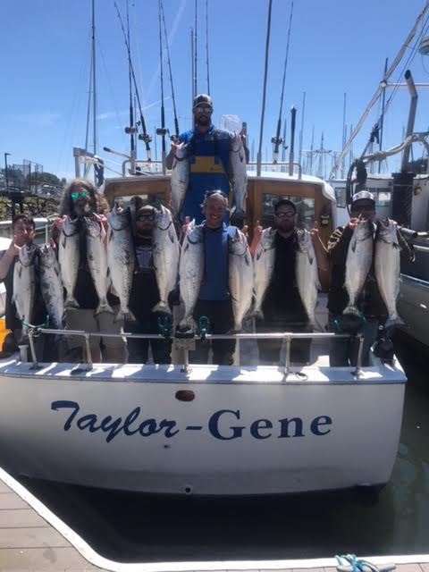 Group of 14 salmon at dock