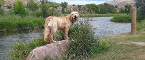 a dog standing on a rock next to a body of water