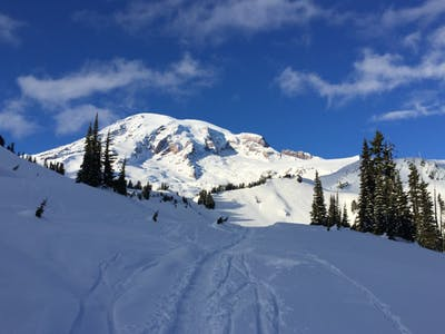 Mt Rainier Tours