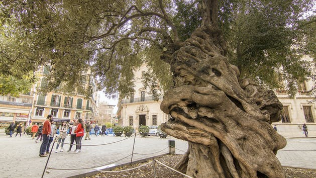 See the sights around the city on a private walking tour