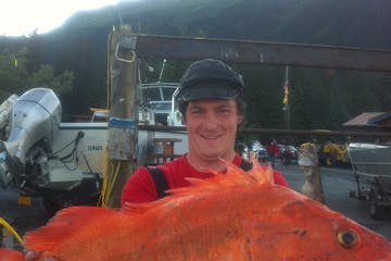 Great Big Yellow Eye - Rock Fish caught near Seward, AK