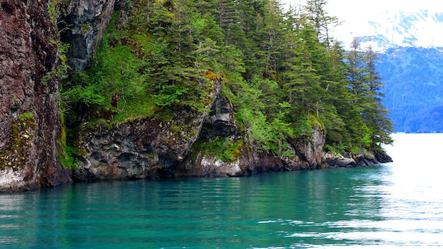 Resurrection Bay with the forest