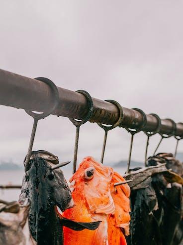Fish Processing Guidelines | Miller's Landing in Seward Alaska