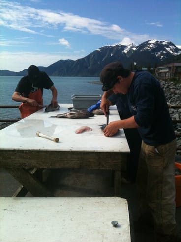 Filleting a Fish at Miller's Landing by the deckhands