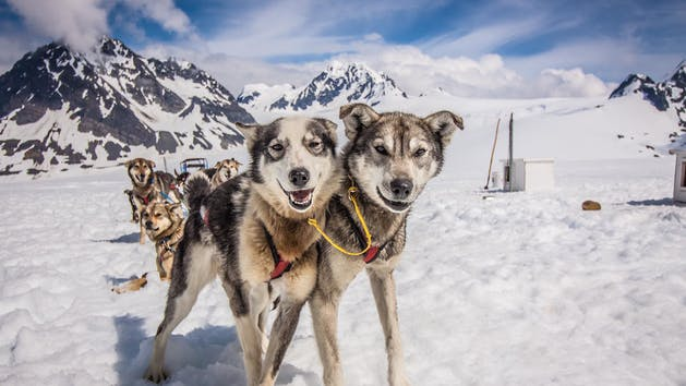 Seward Helicopter Tours - Godwin Glacier Dog Sled Tours