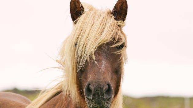 horse in seward, alaska