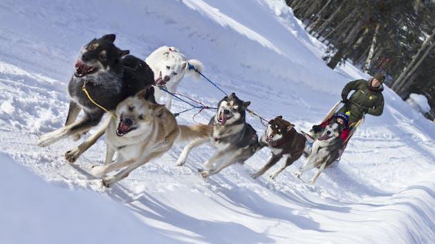 Seward, Alaska Dog Sledding Tours