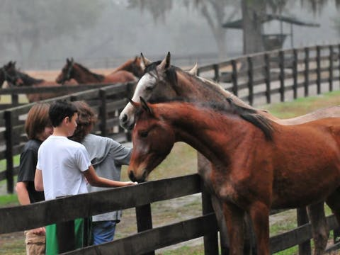 Kids feeding horses on farm