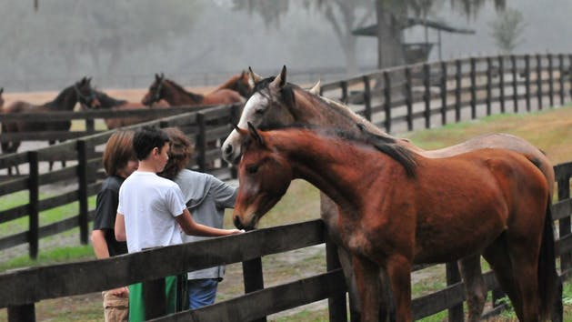 Kids feeding horses on farm