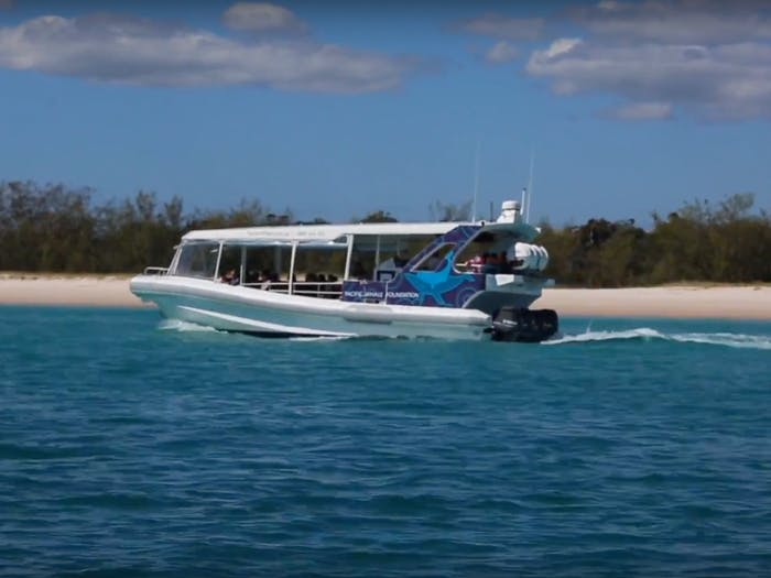 The Ocean Defender on the Ultimate Whale Watching Cruise by Pacific Whale Australia