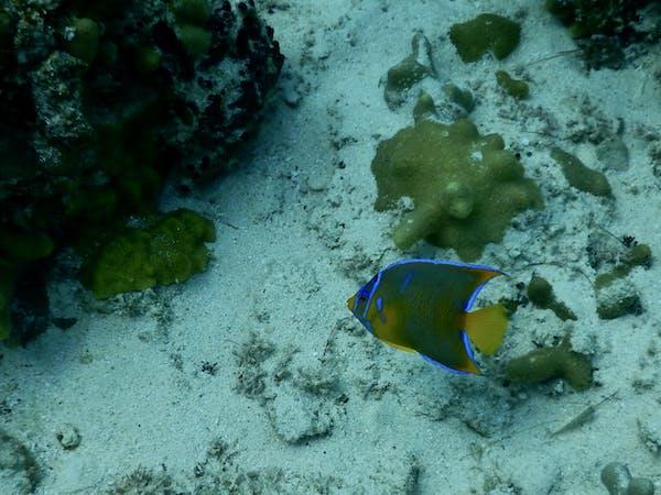 a fish underwater